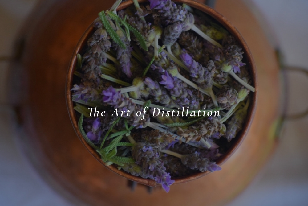 Distilling essential oils and hydrosols